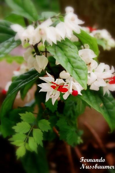 Flores 01
