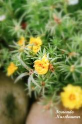 Flores_07