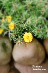 Flores_08