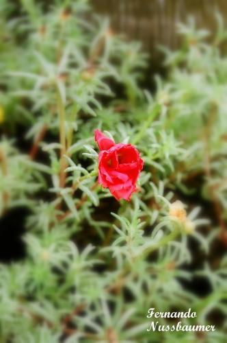 Flores_09